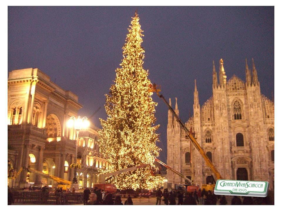 Grande albero di Milano