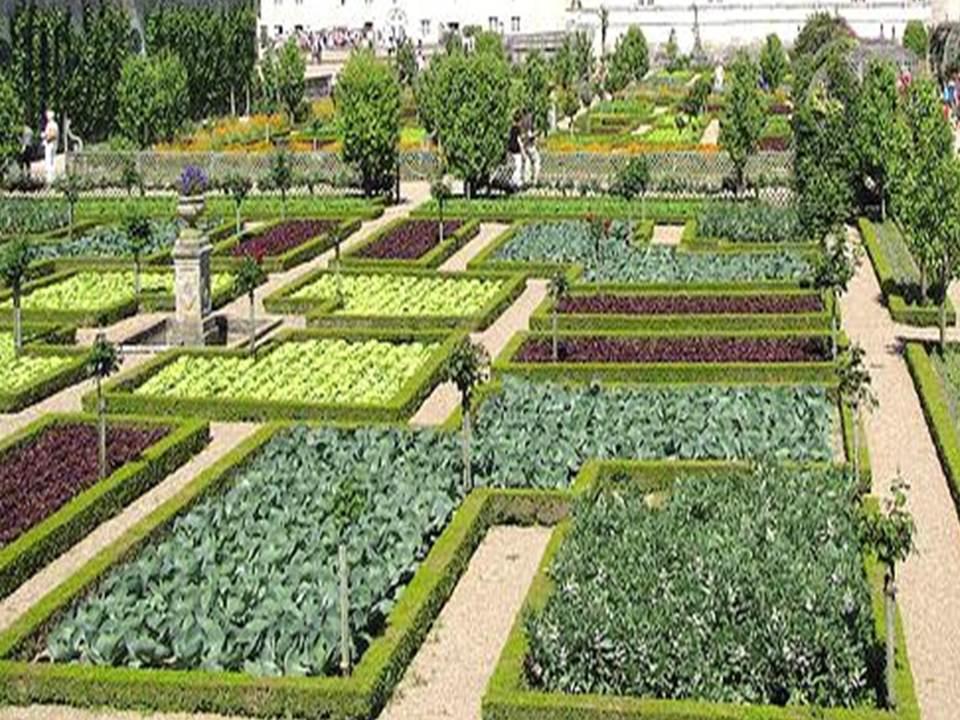 Orto giardino vegetable garden planeta grandi vivai for Orto giardino