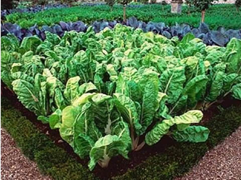 Orto giardino planeta srl - L orto in giardino ...