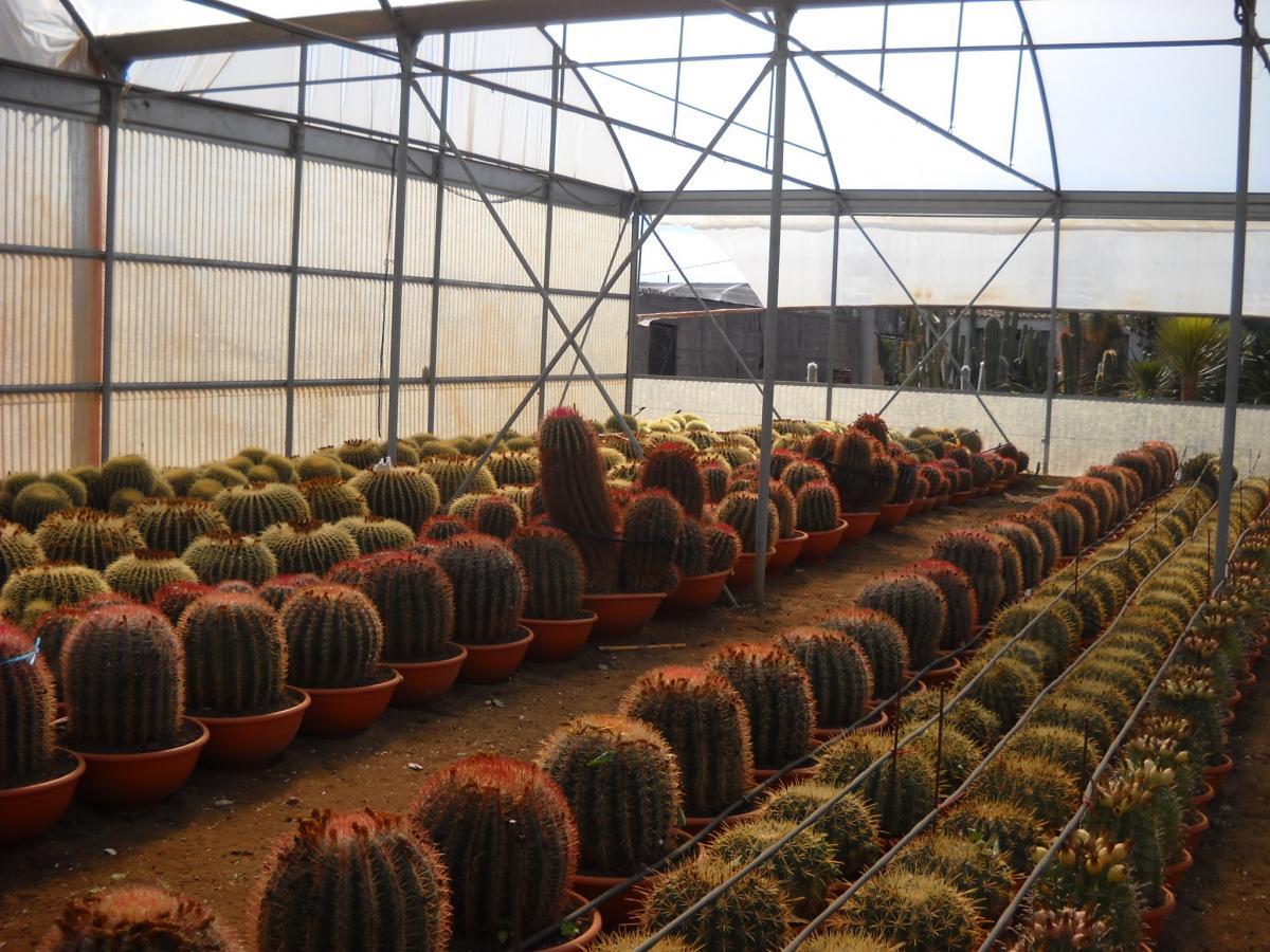 Catalogo piante grasse e succulente planeta srl for Mondo catania